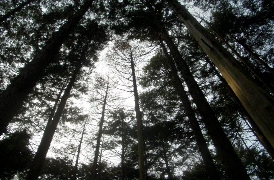 きらめ樹 茨城:ケアを待つ森