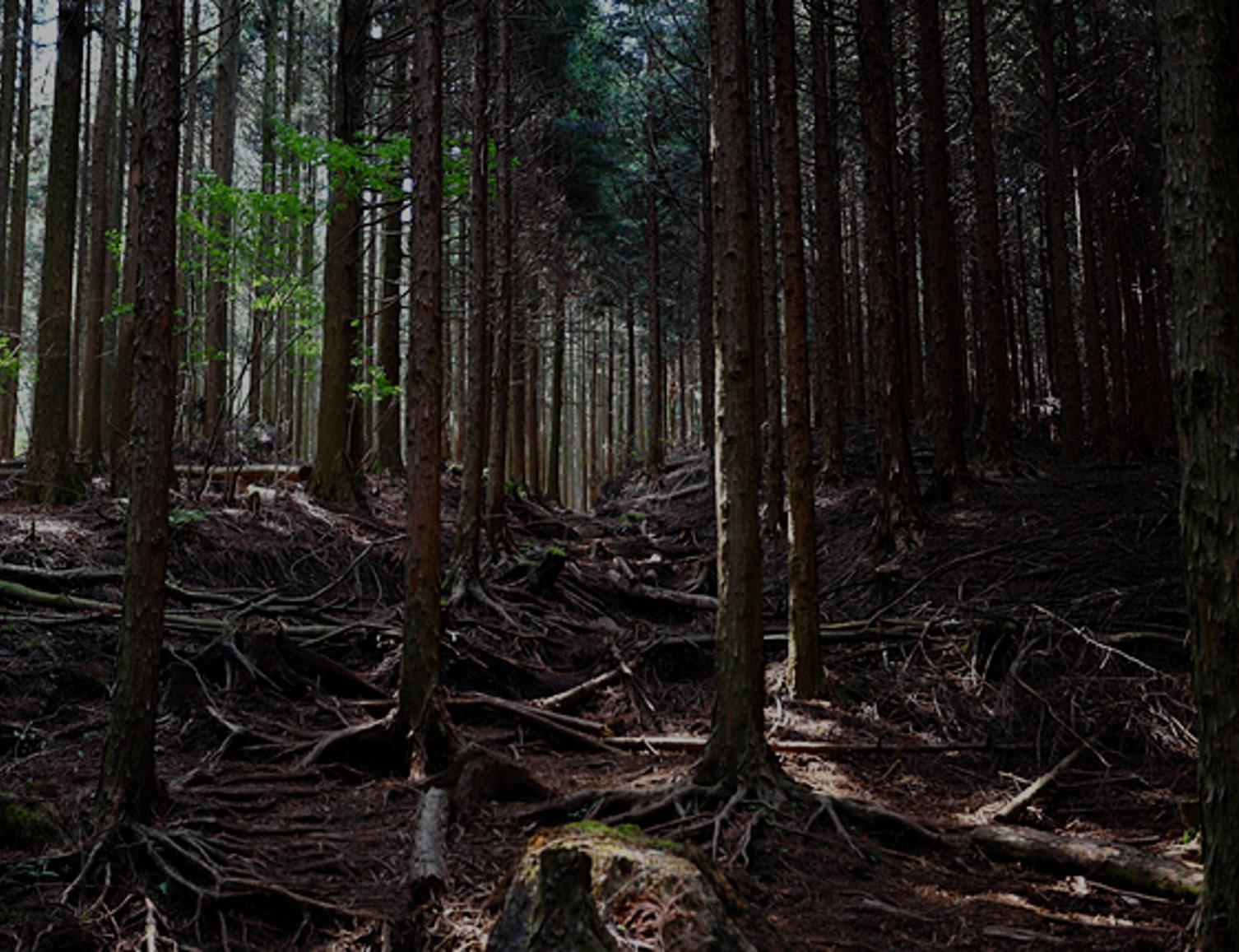 痩せほった森