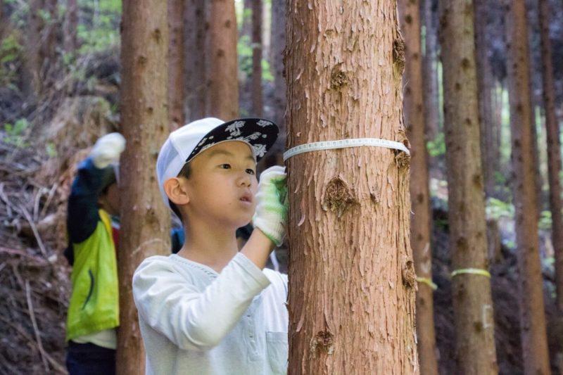 きらめ樹 常陸:子供たち